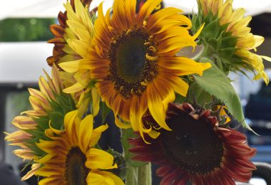 Sunflowers at the Phoenixville Farmers Market in July